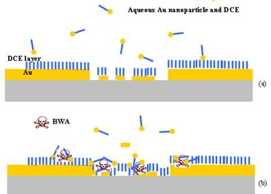 Aptamers for Detecting Biological Warfare Agents (BWAs)